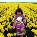 Flower field ; comments:17