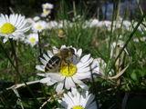 Пролетна ; Comments:24
