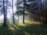 Добро утро - II ; comments:69