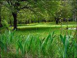 Зелено,..зелено ; comments:46