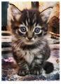 Big evil cat ; comments:16