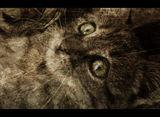 Две котешки очи ; Comments:13