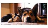 кучешки живот ; comments:11