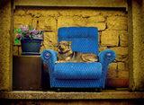 Кучето Барби в натюрмортни настроения! ; comments:51
