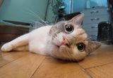 пак мойта котка:) ; comments:19