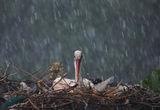 дъждовно.. ; comments:25
