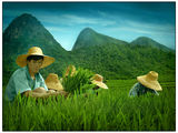 the rice field 3 ; comments:25