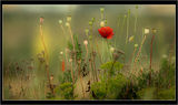 no name ( ID=640122 ) ; comments:29