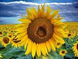 Слънцето е в твоите коси... ; comments:44