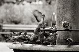 ...още ли сънуваш мен и теб в някой град с гълъби и със зелен площад?... ; comments:66