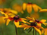 Цветя ; comments:20