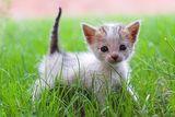малък хищник.. :) ; comments:25