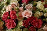 Български рози ; comments:41