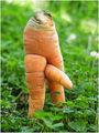 ... чудо морков ... ; comments:21