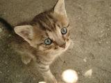 Котенце ; comments:38
