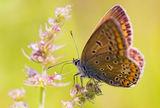пеперудено.. ; comments:17