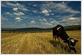 Из дневника на една крава ; comments:46