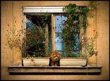 старчески дом за домашни любимци ; comments:33
