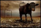 """""""Един нормален ден""""-из """"Дневниците на лудата крава"""" ; comments:70"""