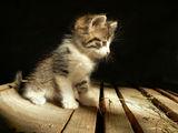 малкото коте ; comments:105