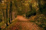 пътечка в гората ; comments:42