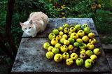 Натюрморт с дюли, една ябълка и четири ореха, част II ; comments:36