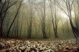 Мъгливо... ; comments:65