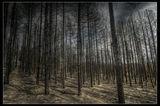 Мъртвата гора ; comments:25