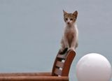 Натюрморт с коте ; comments:29