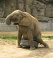 """най-добрата """"приятелка"""" на слончо ;) ; comments:11"""