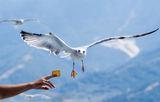 Хищна морска птица ; comments:74