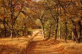 Есенна разходка ; comments:24