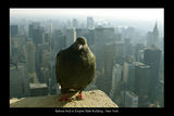 86th floor .. is not impossible ; comments:25