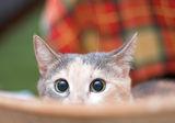 пак мойта котка.. ; comments:18