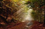 Есенни друмища ; comments:48