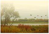 Autumn time ; comments:36