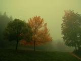 Есенни мъгли 1 ; comments:73