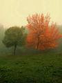 Есенни мъгли 2 ; comments:49