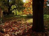 Палитрата на октомври ; comments:28