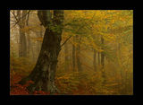 тънката канаваца на ранната есенна мъгла ; comments:26