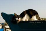 Коте'моряк ! ; comments:13
