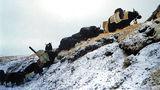 tibet365 ; comments:1