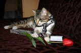 Ммм как ще я изненадам мойта мацка за Св.Валентин ... ; comments:5