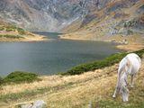 Приказки край езерата ; comments:14