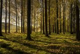 Есен в гората ; comments:31