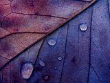 Есенна сълзливост! ; comments:34