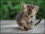 ..  small cat -  Big Game ; comments:60