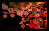 есен, есен... ; comments:48