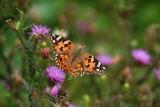 Пеперудена есен ; comments:56