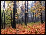 Дъждът прогони мъглата ; comments:85